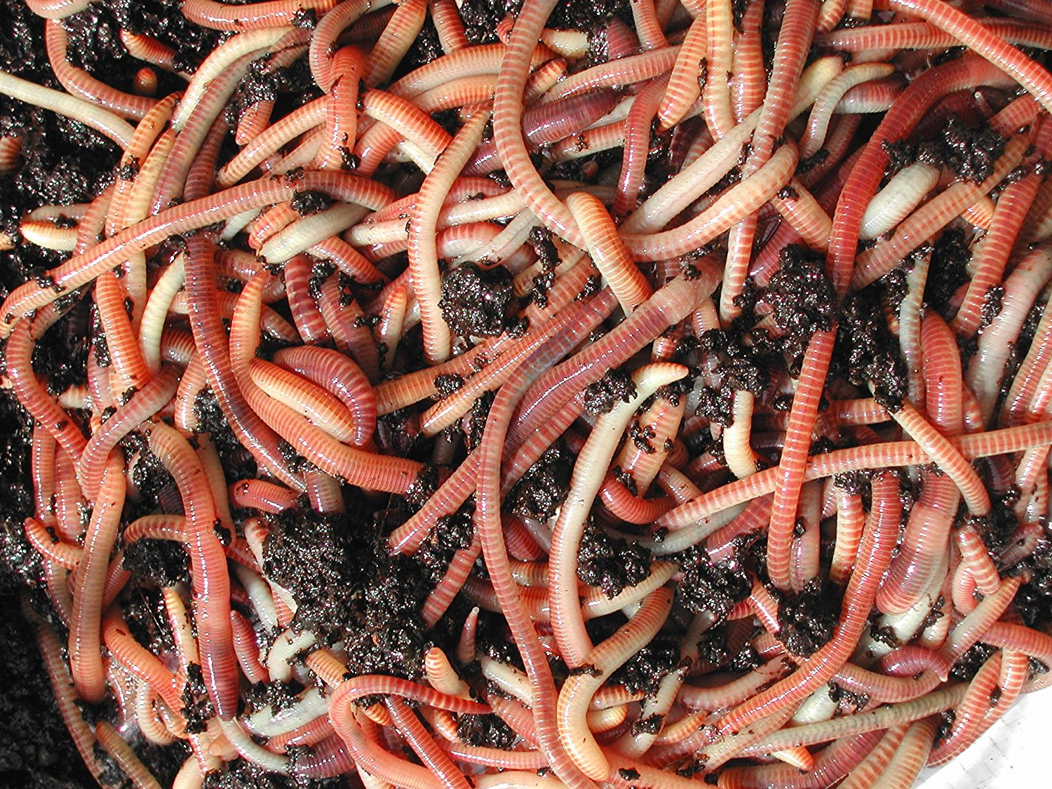 Worms For Our Waste Water Treatment Sustainable Small Houses